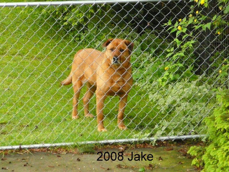Jake - Mixed Breed