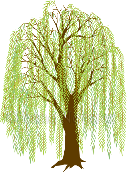 art by jeane nevarez willow tree willow ideas pinterest rh pinterest com willow tree clip art free willow tree clipart