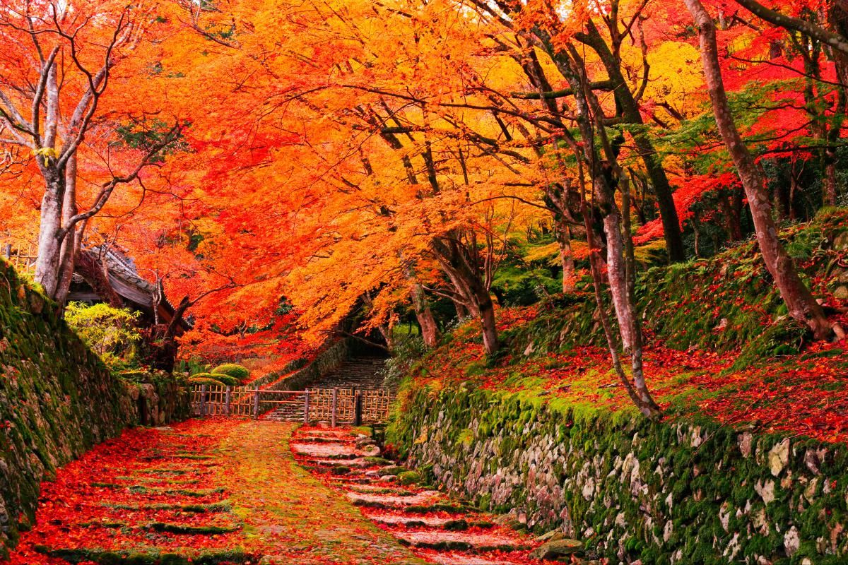 「百済寺 紅葉」の画像検索結果