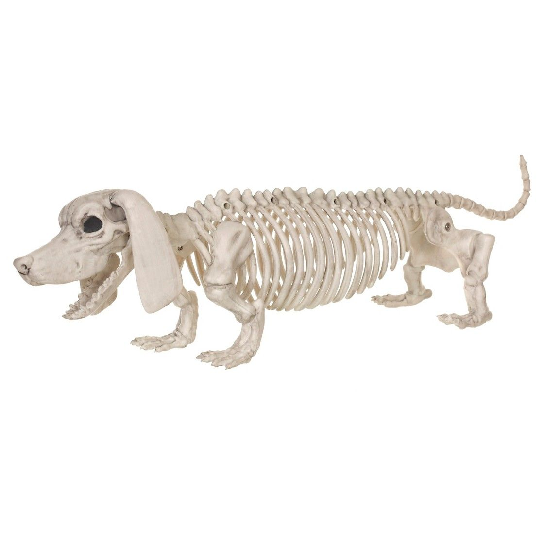 Dachshund Halloween Decorations.Halloween Dachshund Dog Skeleton Dog Skeleton Halloween Skeletons Target Halloween