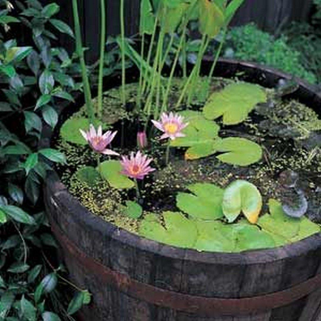 25 Easy Diy Container Water Gardens Https Wonderfulbackyard Com 2018 11 16 25 Easy D Container Water Gardens Water Features In The Garden Water Garden Plants
