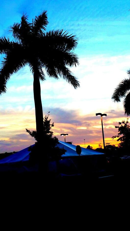 Turquoise Amidst Silhouetted Palm! Via Robin Shake