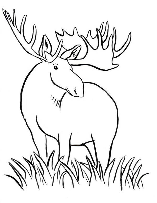 Grass Coloring Page Coloring Pages For Free Coloring Pages