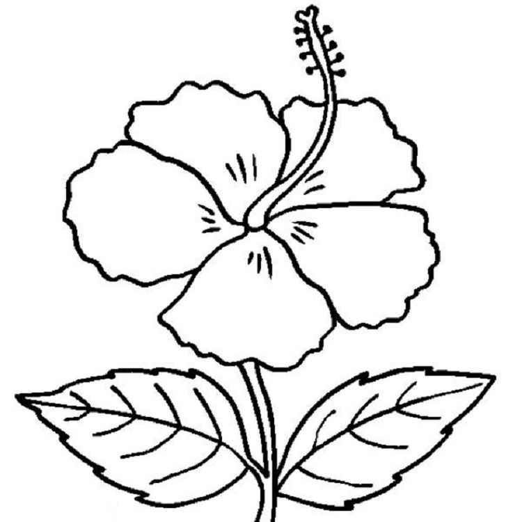 Free Hibiscus Flower Coloring Pages Flower Outline Flower Printable Flower Drawing