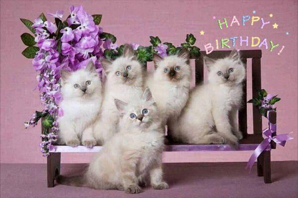 Pin By Aviva Brooks On Gefeliciteerd Met Je Verjaardag Happy Birthday Ragdoll Kitten Cat Breeder Ragdoll Cats For Sale