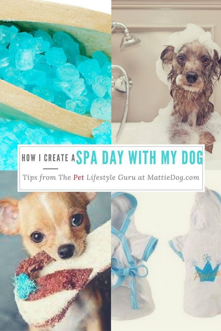 How I Create A Spa Day With My Dog Dog spa, Pets