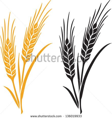 ears of wheat barley or rye vector visual graphic icons ideal for rh pinterest com barley vector art free barley vector art free