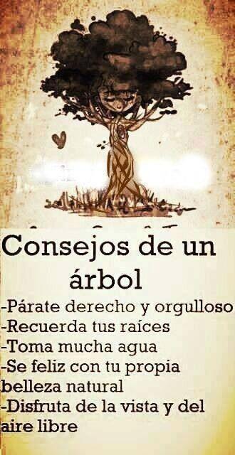 Frases pintando-con-palabras: Consejos de un rbol. http://www.gorditosenlucha.com/