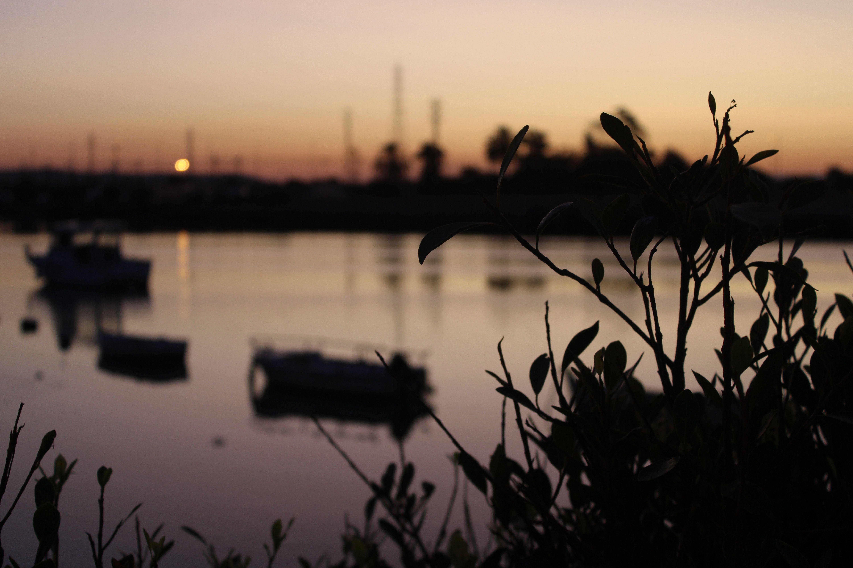 barquitas en el rio guadalete desde la fuente de las galeras al amanecer