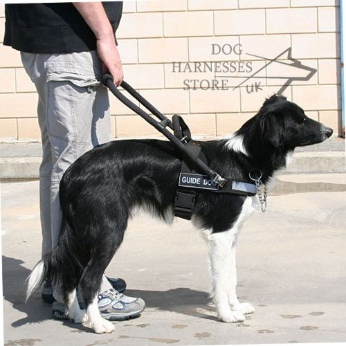 Bestseller Guide Harness With Id Patches For Assistant Dogs Uk