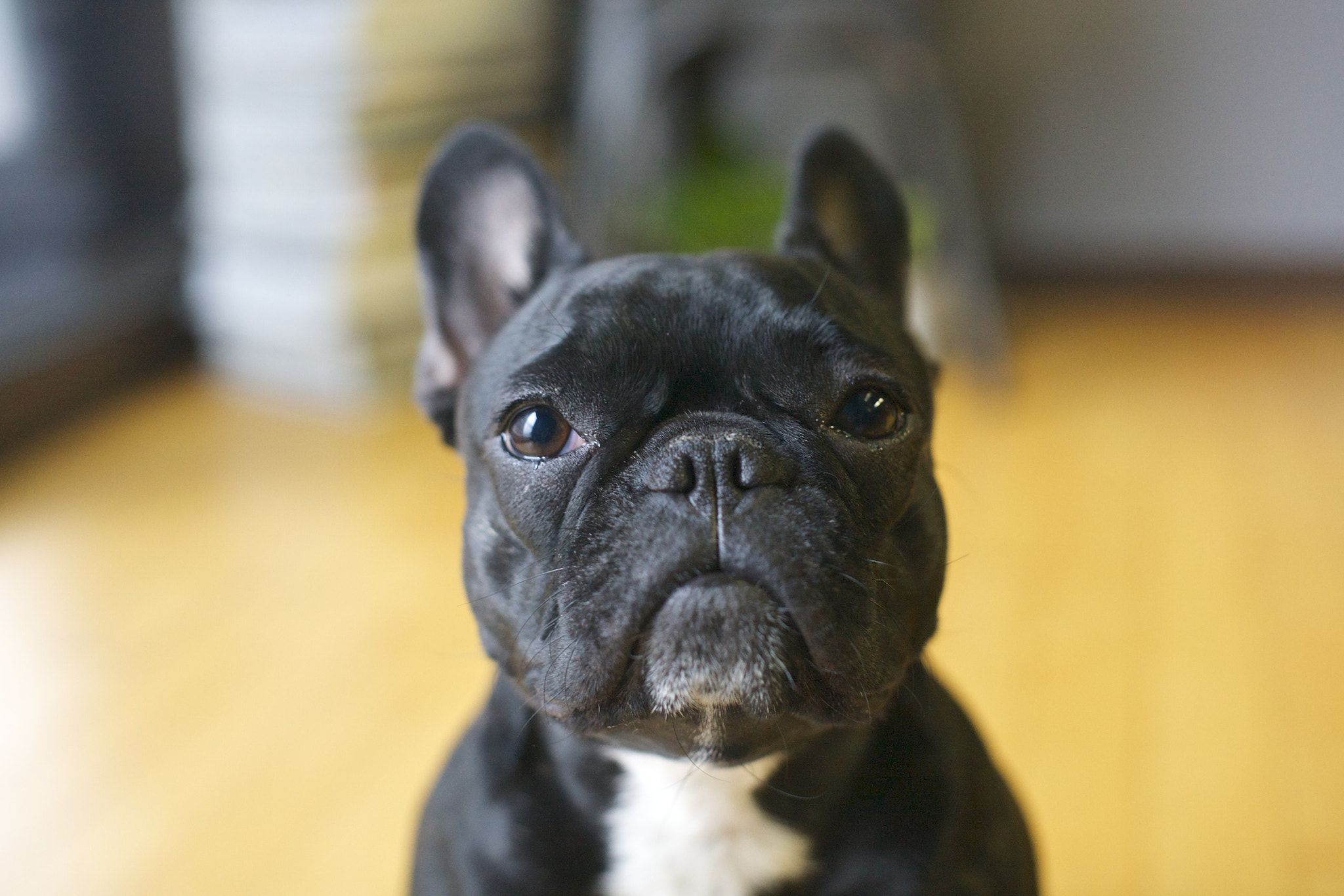 Pin By Michal Halka On Dogs French Bulldog Puppies Dogs