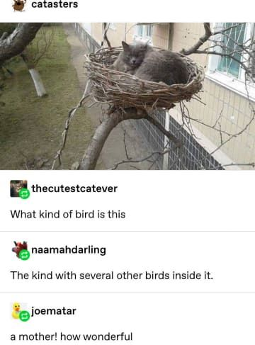 Best Funny Cute 18 Funny Tumblr Posts I Saw This Week That'll Entertain You For A Few Minutes 18 Funny Tumblr Posts I Saw This Week That'll Entertain You For A Few Minutes 9