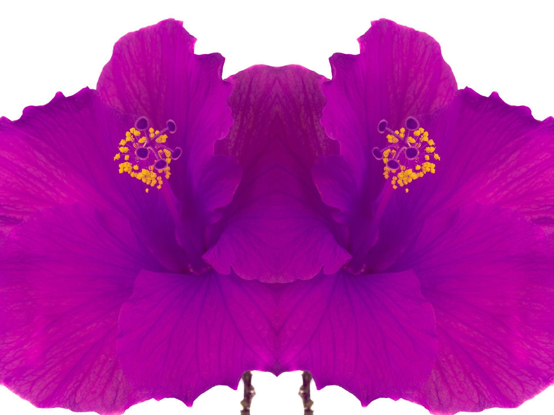 Vibrant Hibiscus Blend Blend