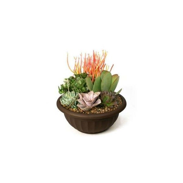 Kit A Succulent Garden Plant Your Own 0881011 At The Home Depot 37 Liked On Polyvore Featuring Plants Flora Succulents Succulents Garden Garden Plants