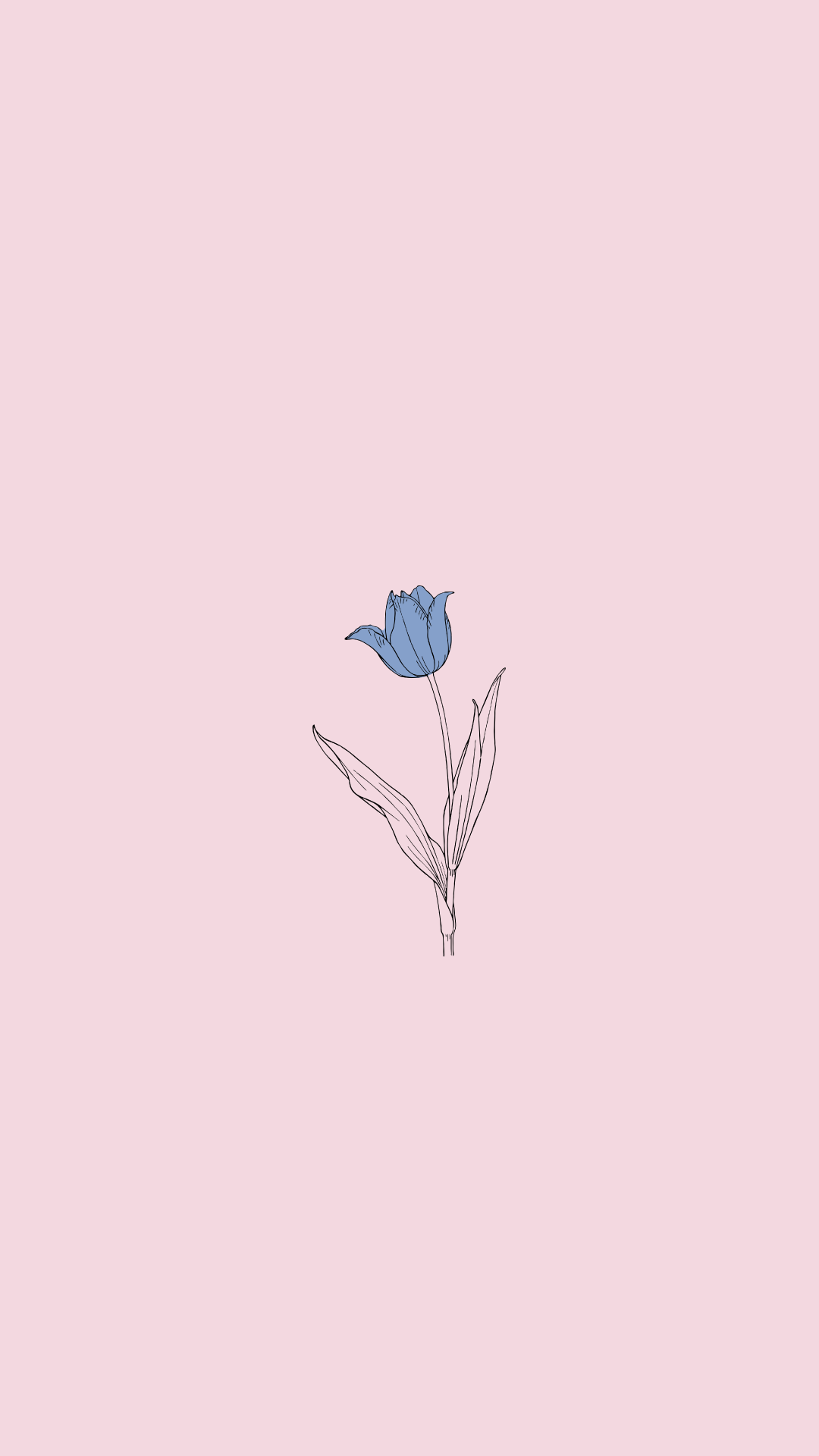 Blue Rose Minimalist Wallpaper Simple Wallpapers Cellphone