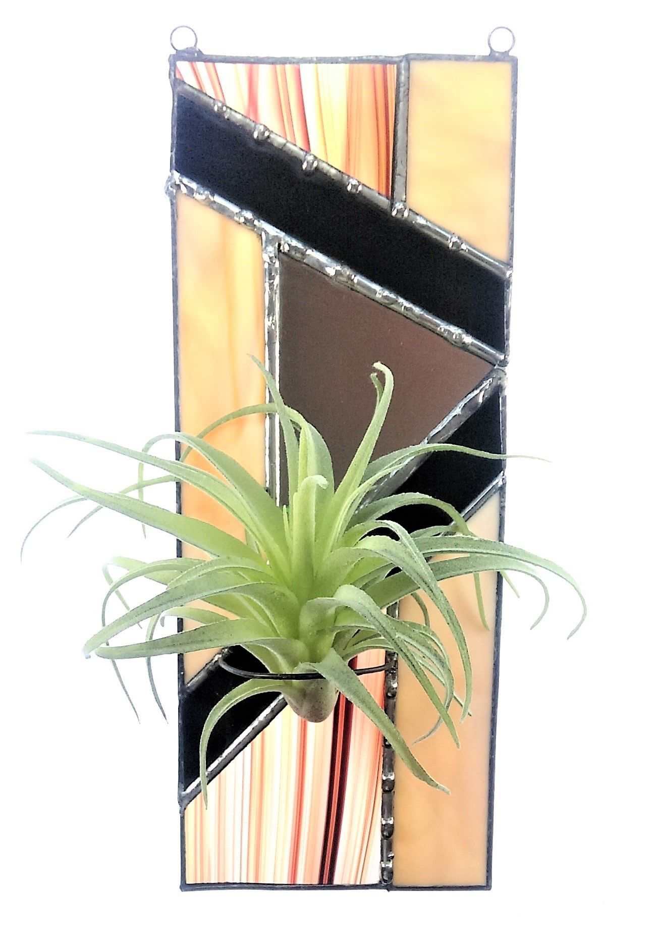 Stained Glass air plant sun catcher. Air plants, Plants