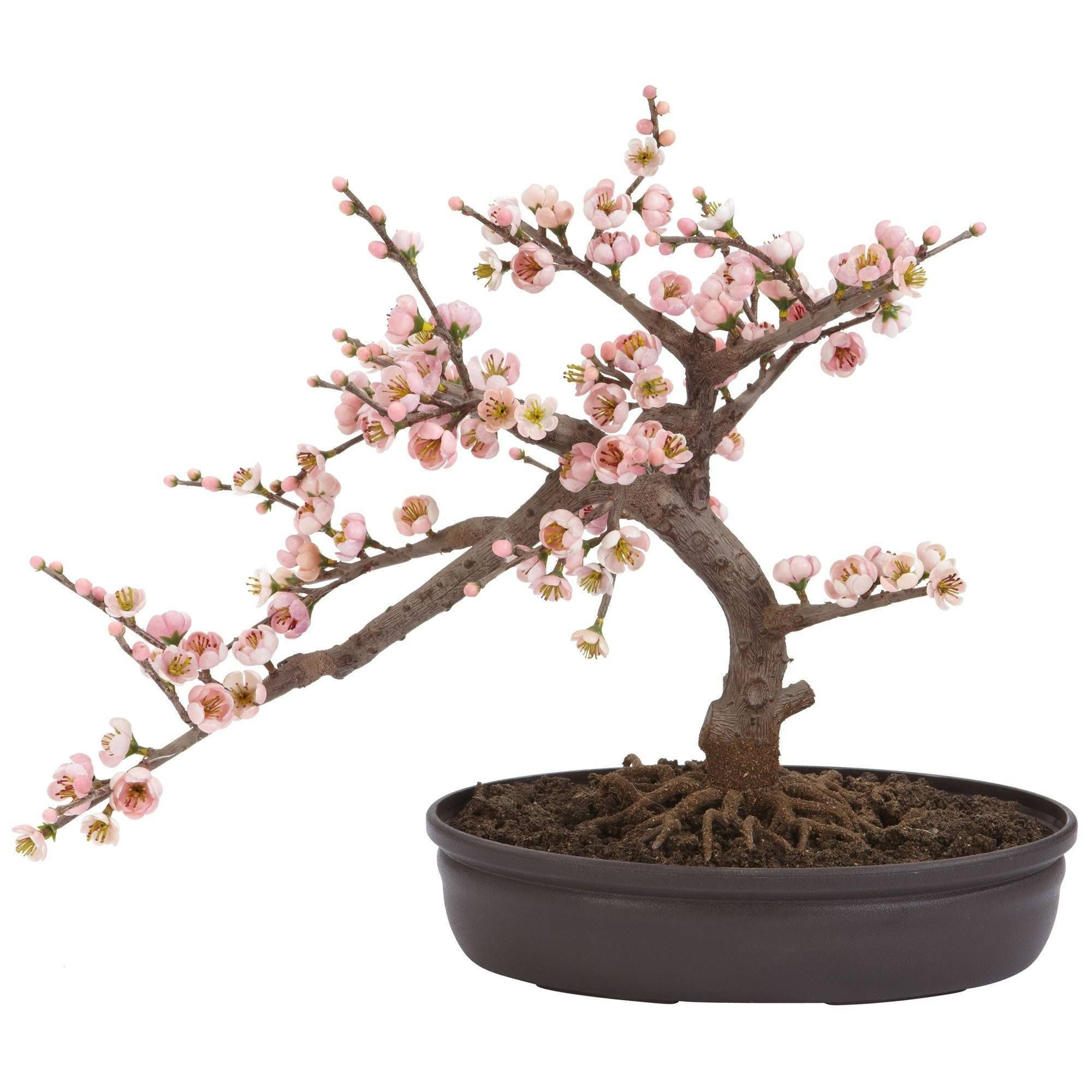 Cherry Blossom Bonsai Silk Tree Cherry Blossom Bonsai Tree Cherry Blossom Tree Blossom Trees