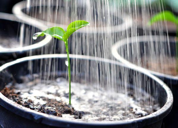 Indoor gardening: Watering and humidity.