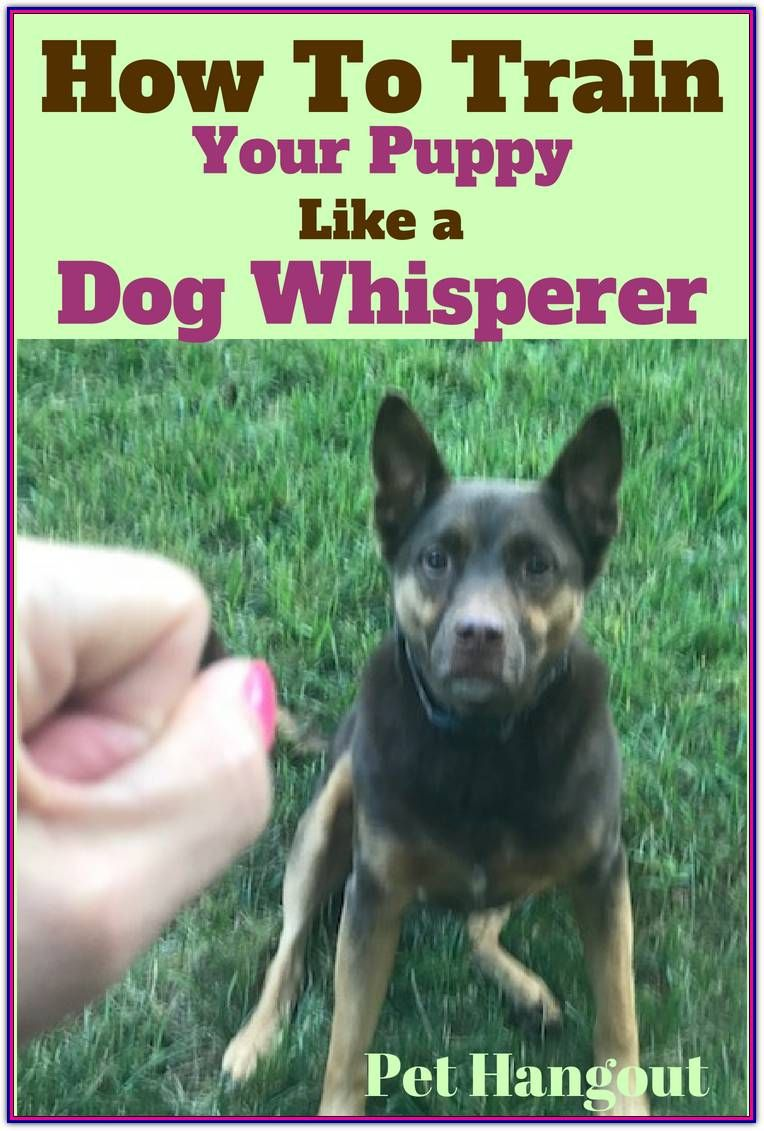 Obedience Dog Training With A Few Key Tips Training Your Puppy
