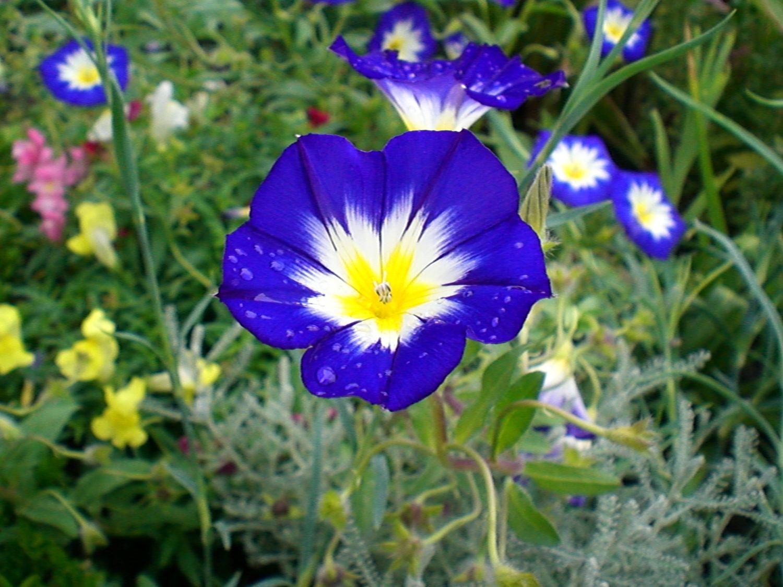 White Yellow Blue Flowers Blue Flower Pinterest Tattoos Love