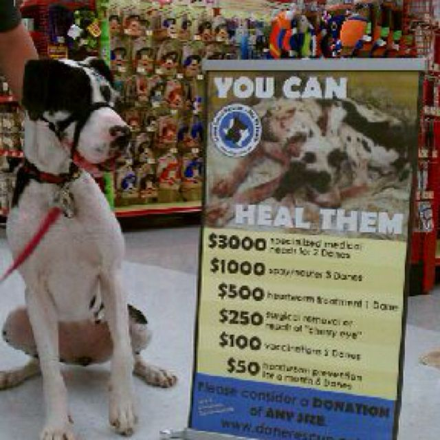 Look At Hope Now Great Dane Rescue Animals Dogs