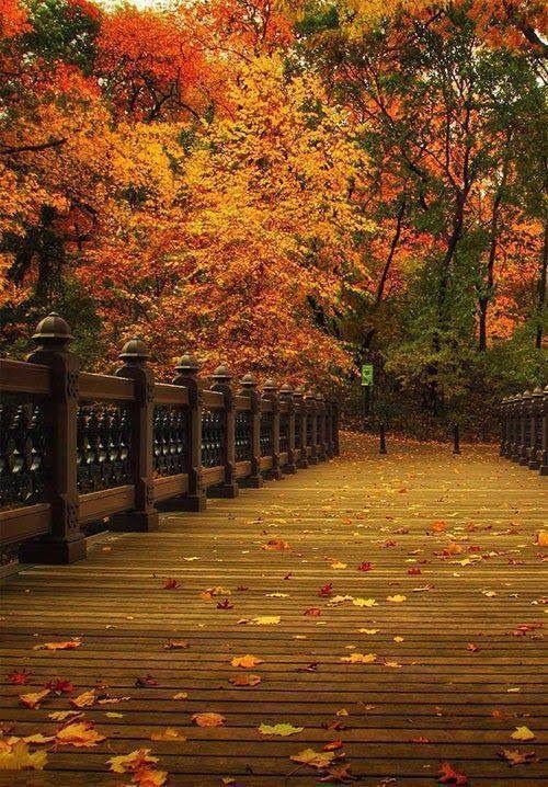 Fotoğraf #autumnphotography