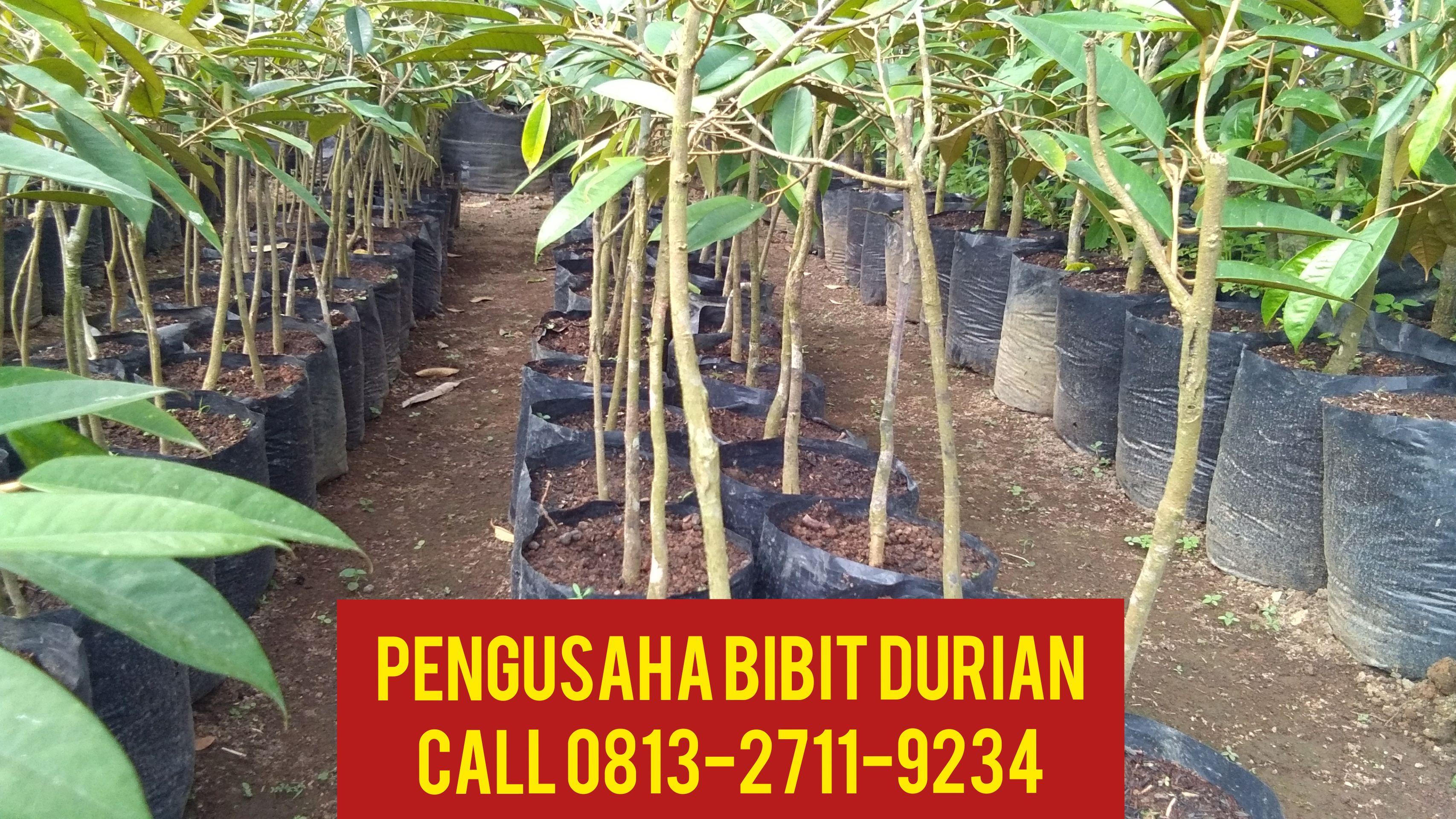 Kebun Durian Montong Karanganyar