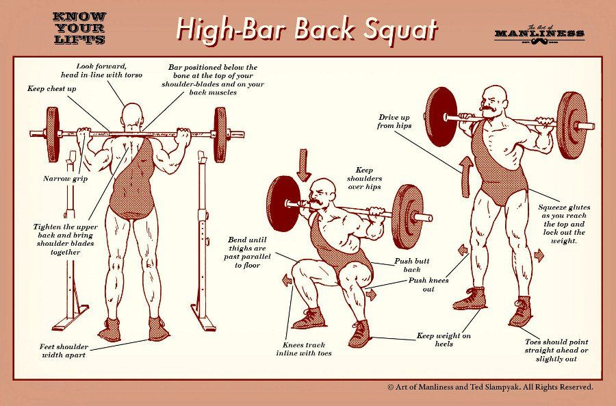 muscle up training guide pdf