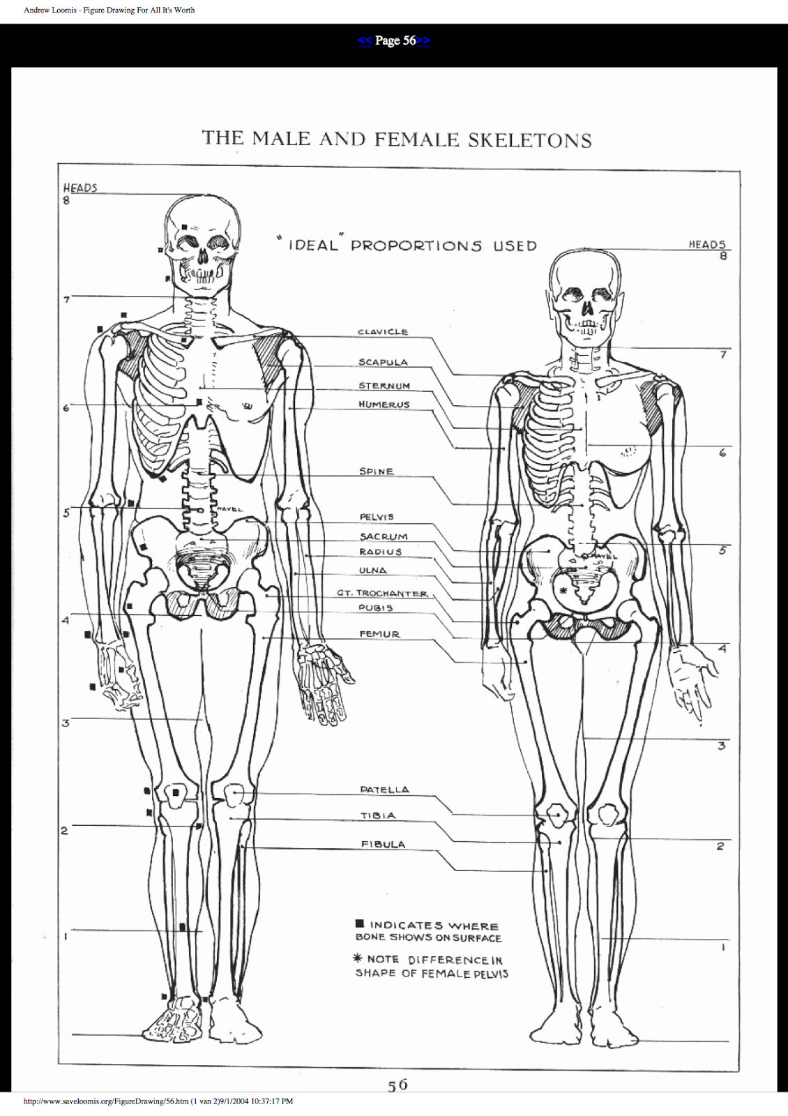 Loomis Human Anatomy | Human Anatomy | Pinterest | Human anatomy and ...