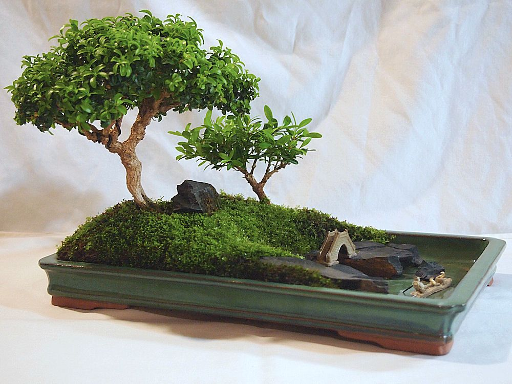 Miniature Japanese Garden Mini Bonsai