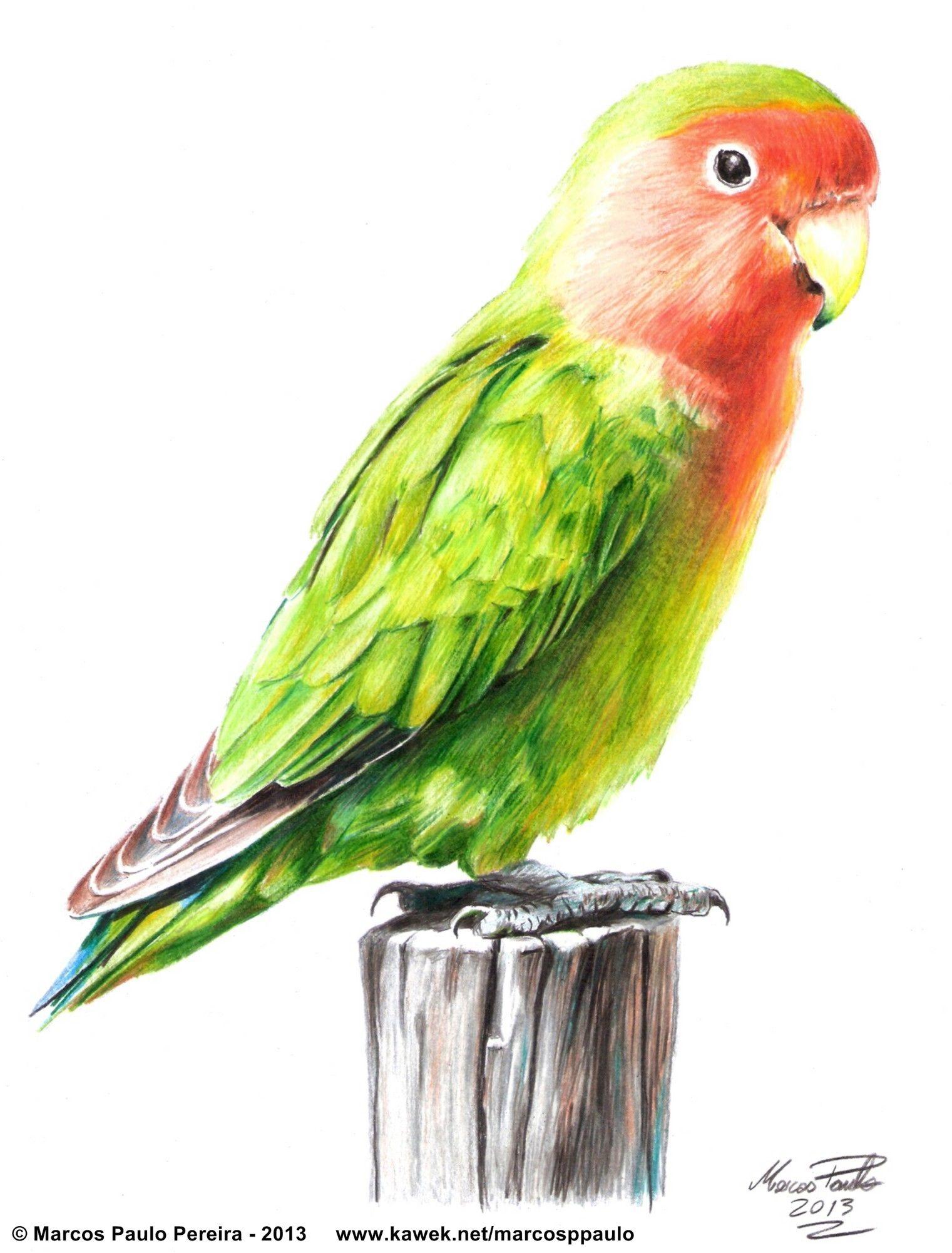 Budgies Sketch By Mondoart Coloring 3 T Bird Drawings