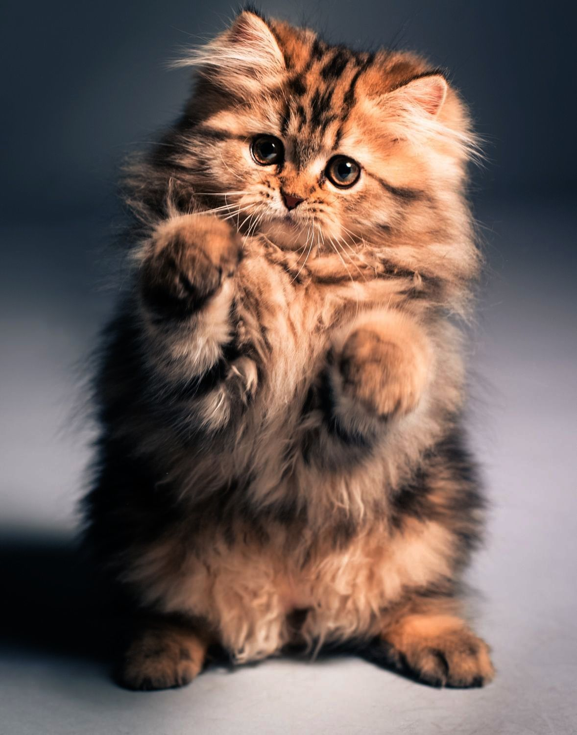Neat Cats And Kittens Magazine Follow Cats Cute Cats Cute