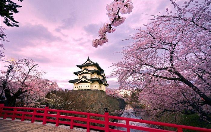 Cherry Blossoms Japan Spring Japanese Castle Hirosaki Japan Travel