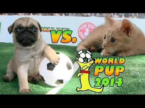 Pug Puppies Face Off With Kittens At The World Cup Cute Pugs