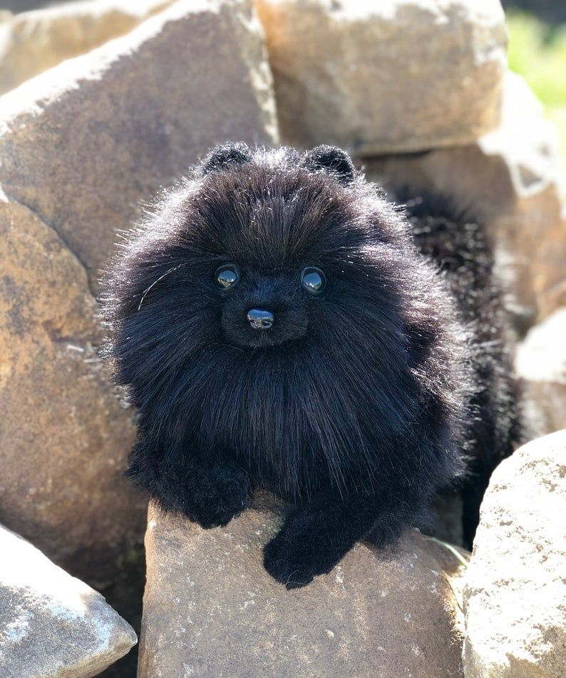 Pomeranian spitz Oliver. realistic Stuffed dog collectible