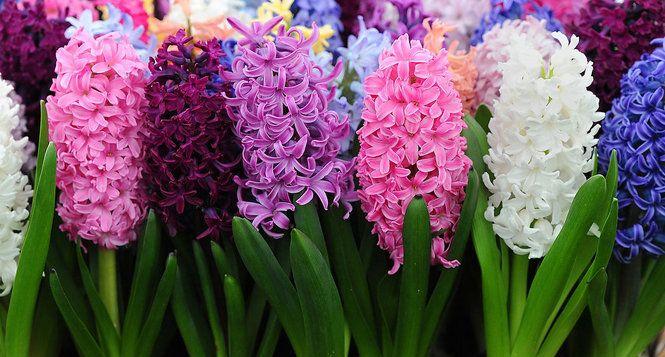 PHOTOS Beautiful Flowers Around The World