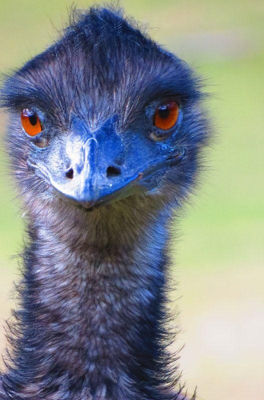 3 Black Mandibled Toucan Pet Birds Most Beautiful Birds Bird Species