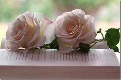 Livros e Flores