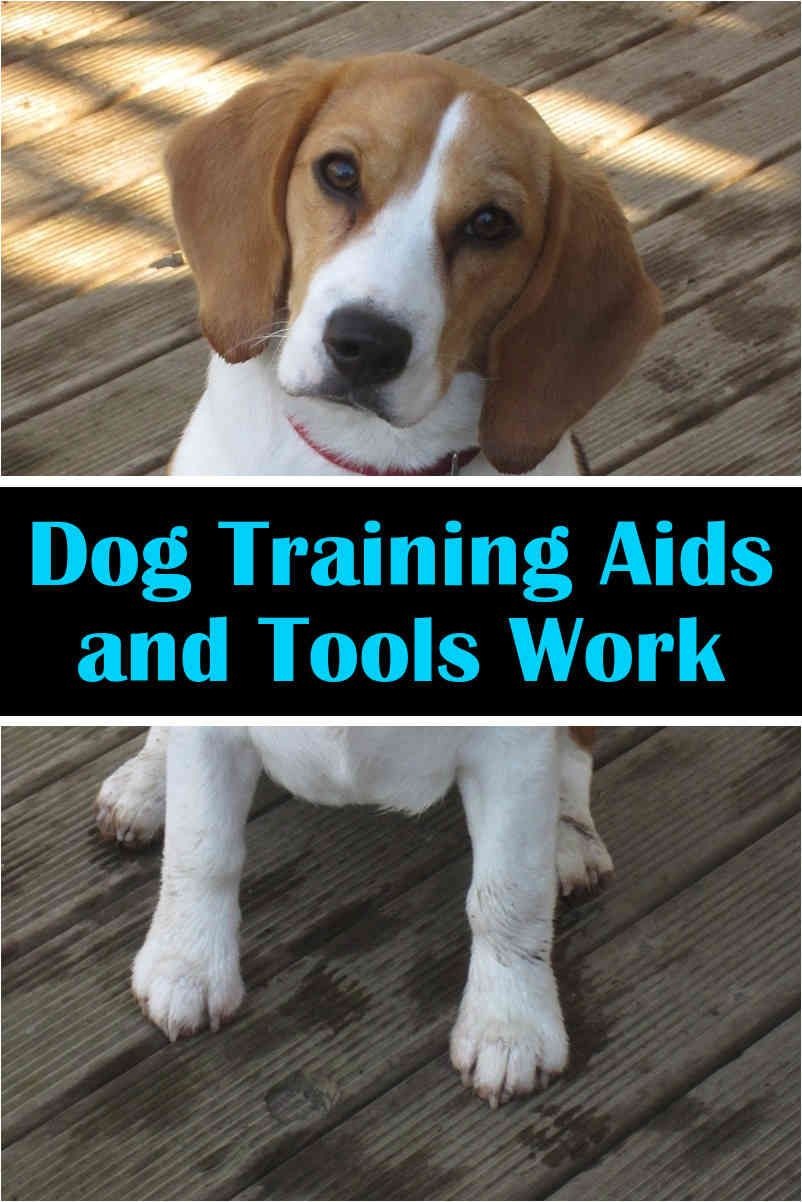 There Are Lots Of A Variety Of Collars And Muzzles Around In The