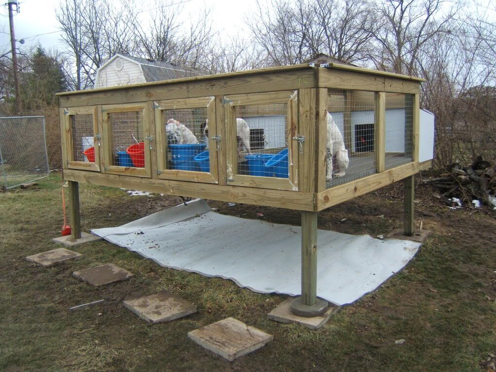 Above Ground Dog Kennels Google Search Hangin Tree