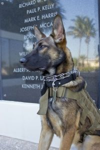 Raven Navy Seal Museum Mpc Military Dogs Military Service Dogs Military Working Dogs