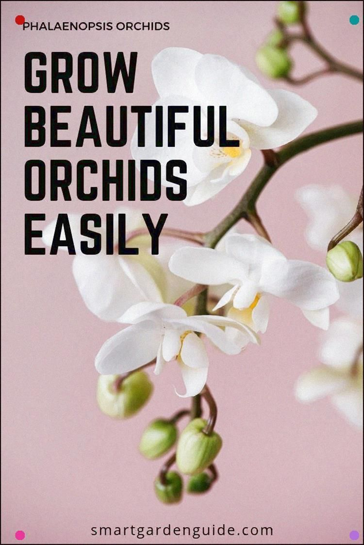 Photo of Phalaenopsis Orchid Care Guide. Get familiar with All You Need To Know To Keep Y…