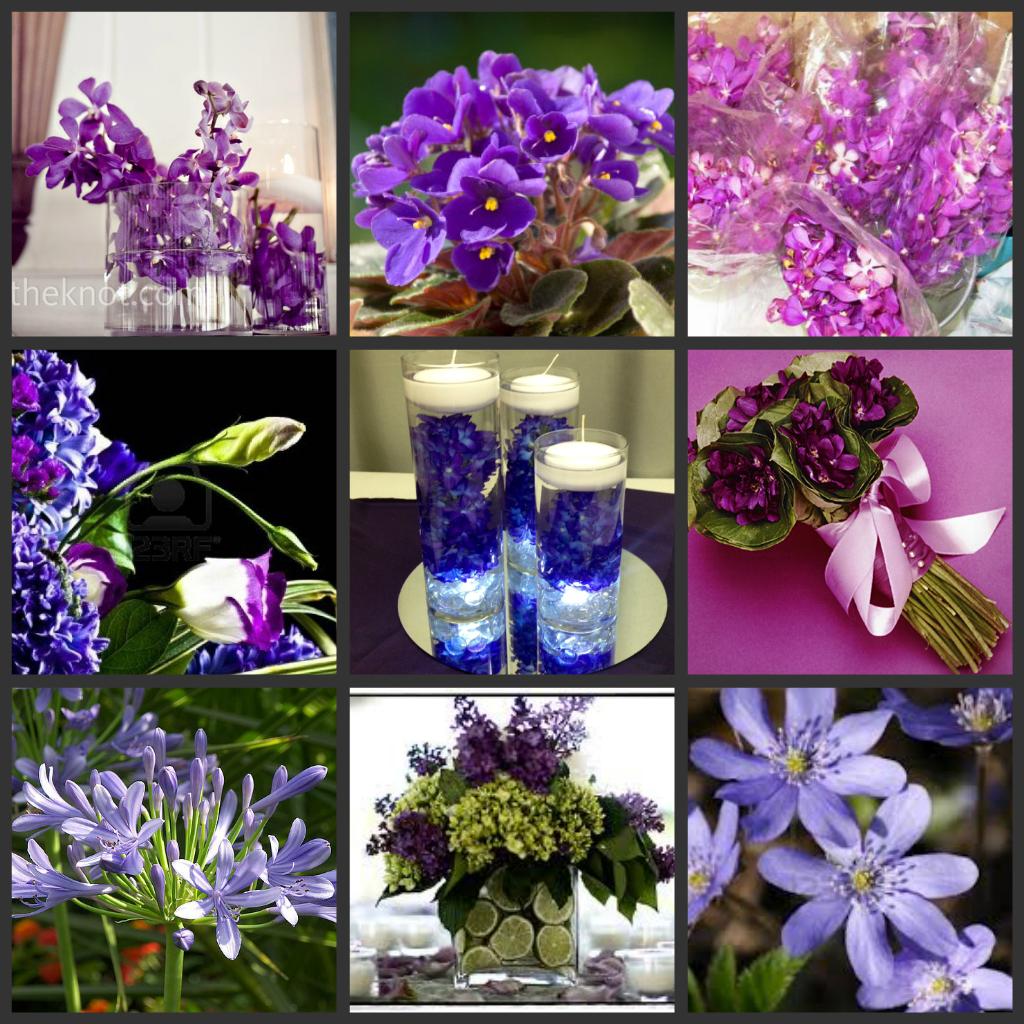 Types Of Purple Flowers Purple Flowers Types Of Purple Flowers