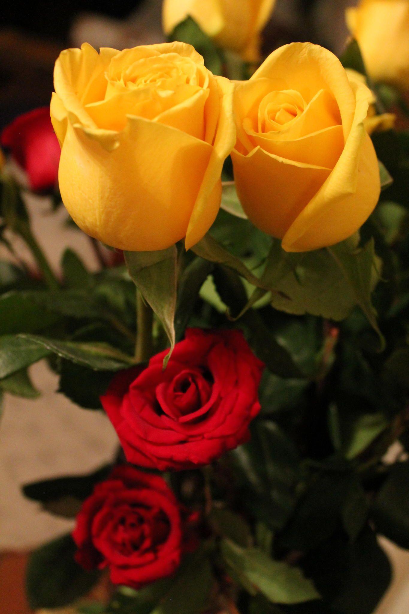 Yellow And Red Flowers Flores Amarillas Y Rojas Bellas