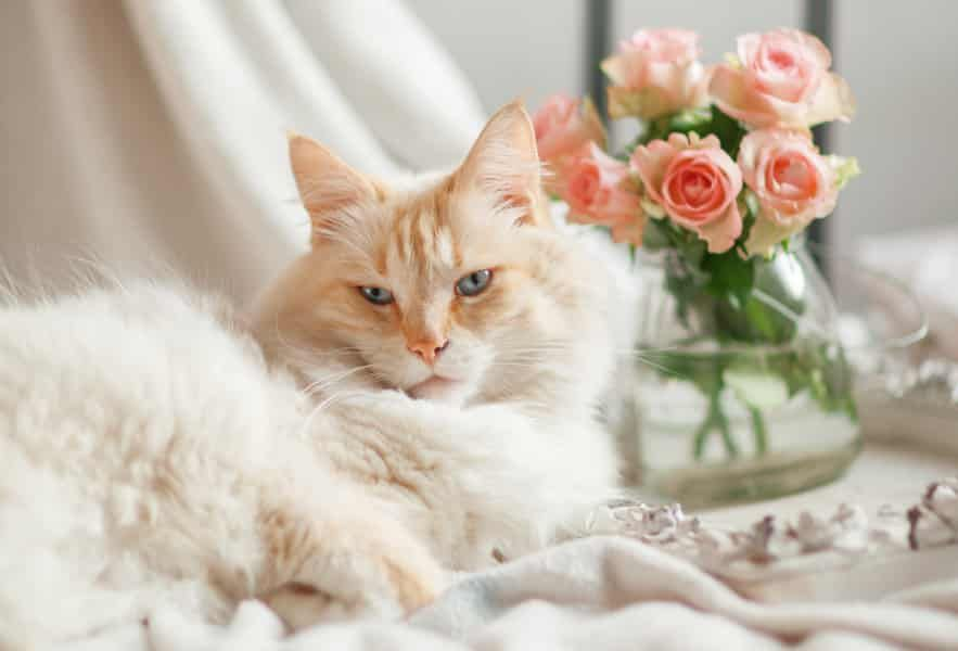5 Flowers That Are Safe For Cats The Catnip Times Cats Cat Flowers Cat Advice