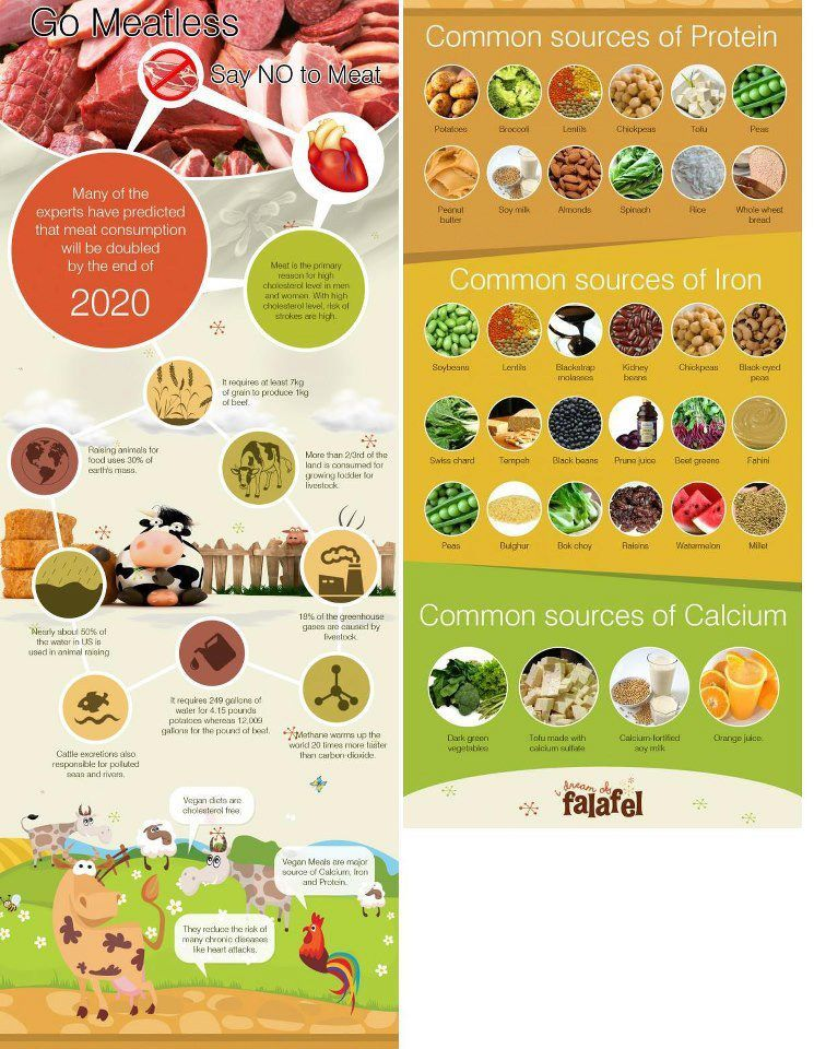 Common Sources of Vegan Protein, Iron and Calcium Matcha