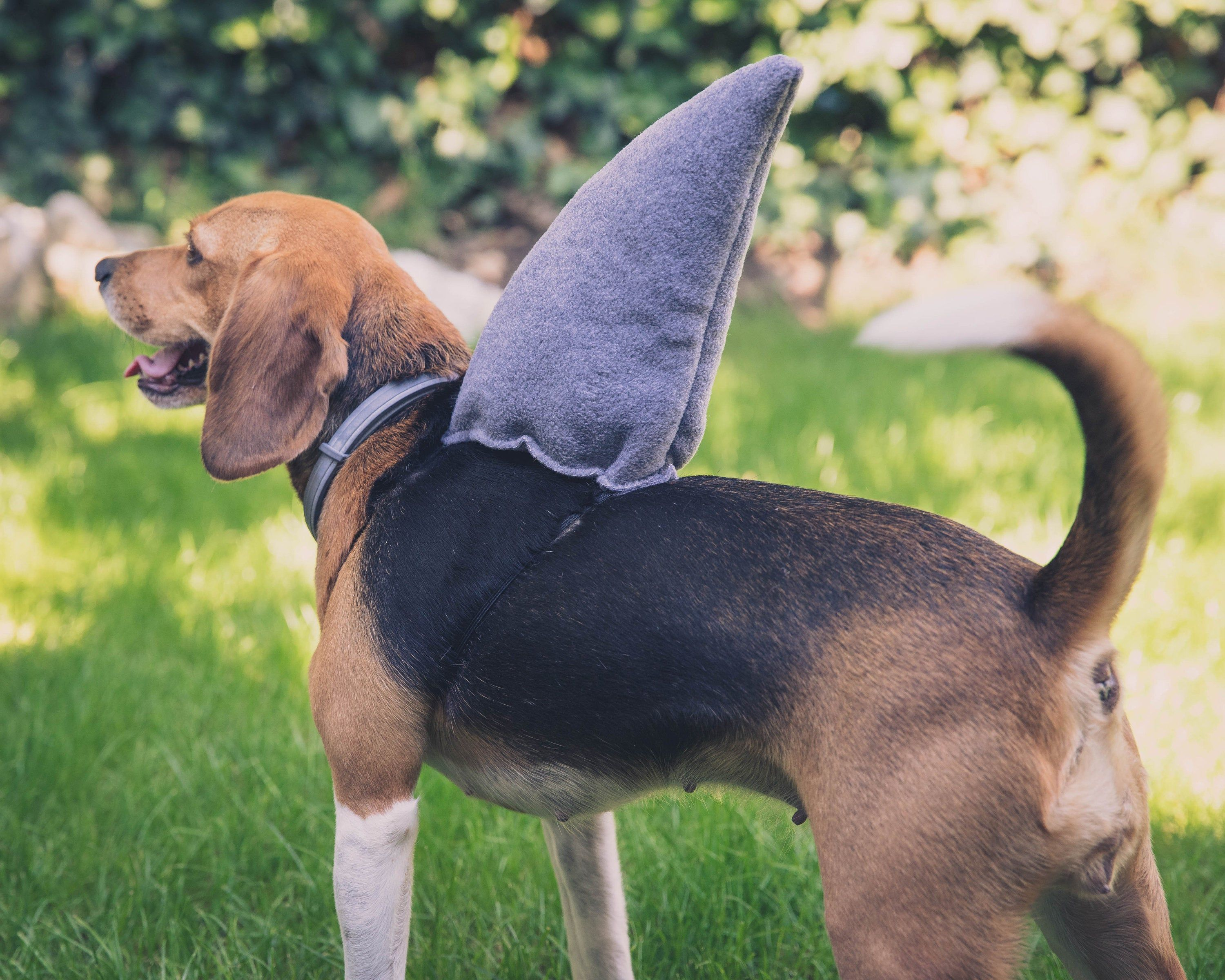 Shark Fin For Dogs Dog Halloween Costume Cosplay Accessory