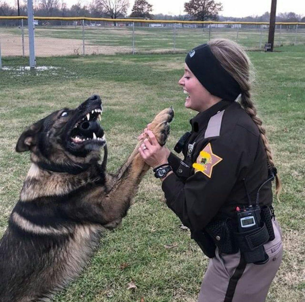 Police Support Usa Backthecops Twitter Military Dogs Police Dogs Military Working Dogs