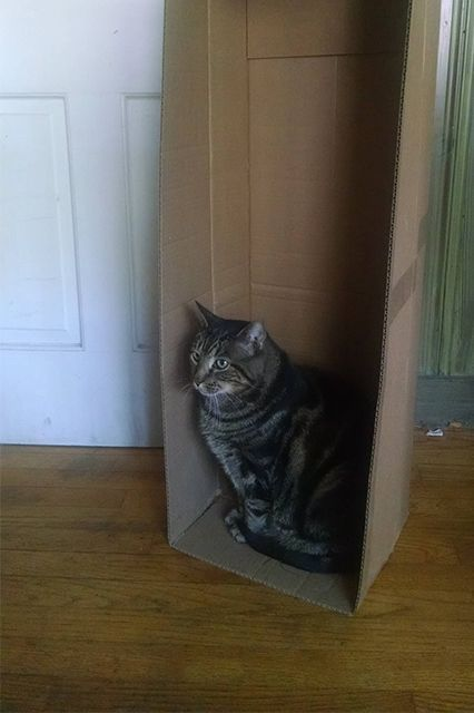 These 12 Cats Cannot Contain Their Love For Boxes #refinery29  http://www.refinery29.com/the-dodo/93#slide-5  One day I'll grow into it.