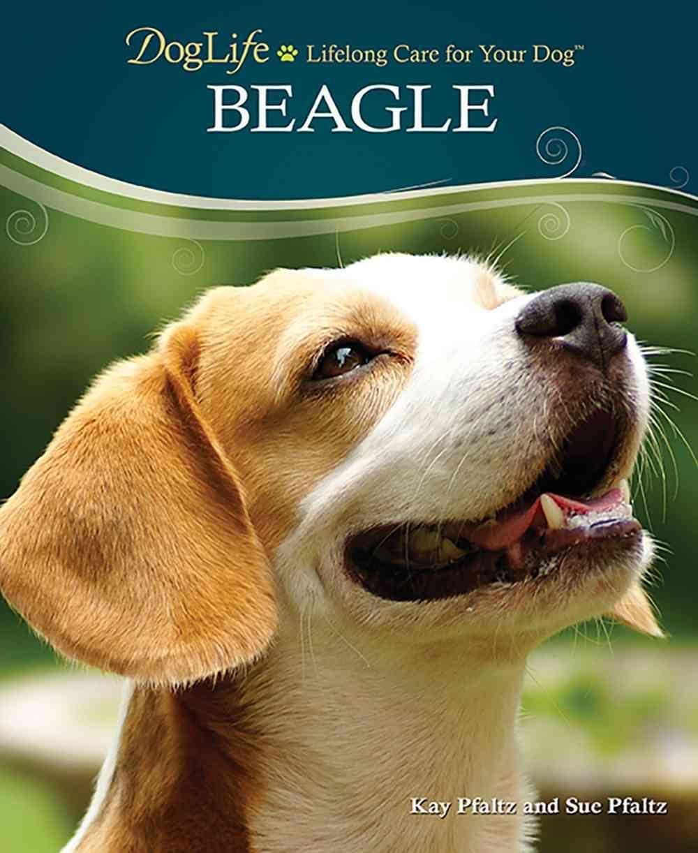Presents An Introduction To Beagles Describing Their Physical